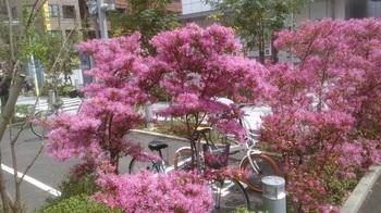 病院の花.jpg